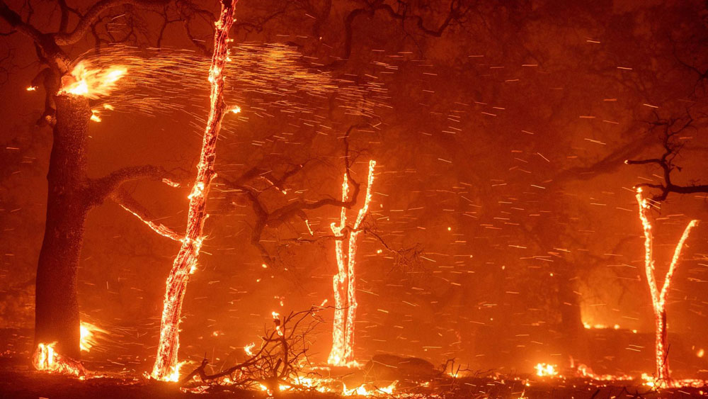 Wildland-Urban Interface Embers - Embers Protection Services